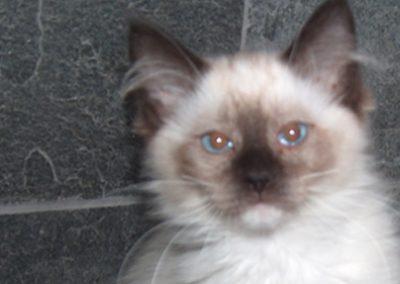 new-kitten-1